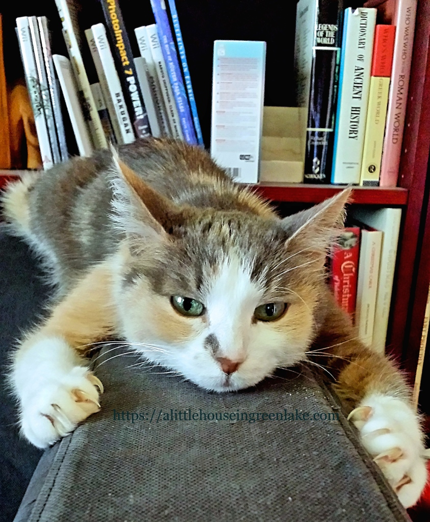 strabo hugging the couch in the living room, 2014