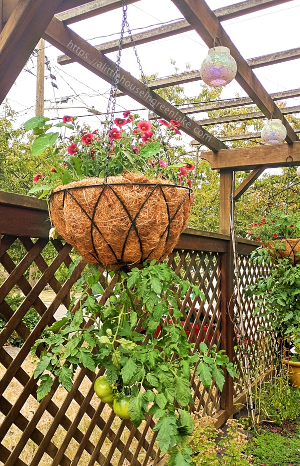 ALHIGL | hanging baskets3